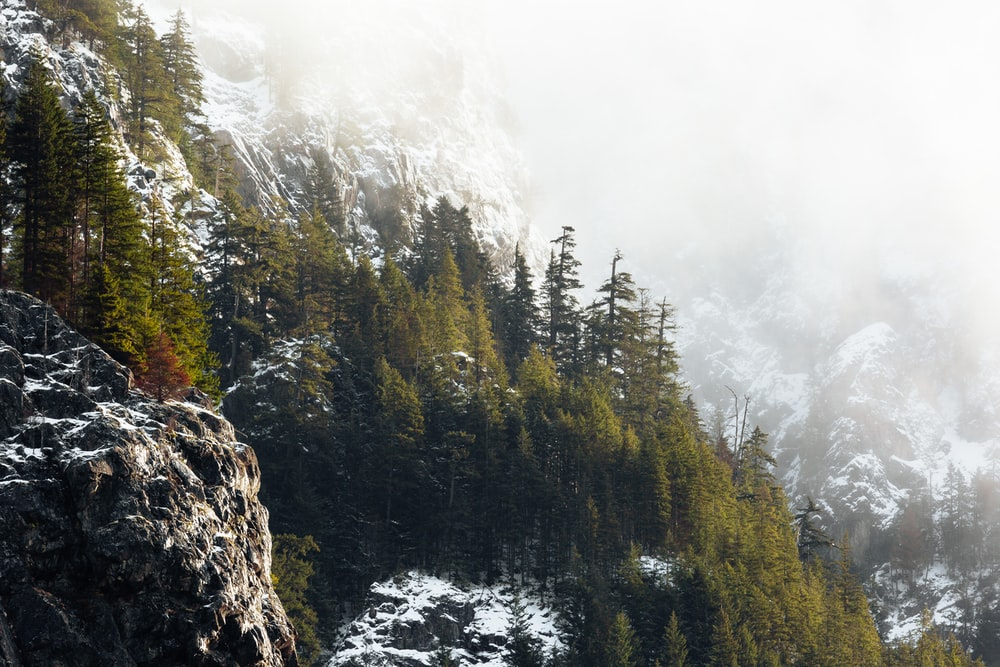 pine forest-covered mountain