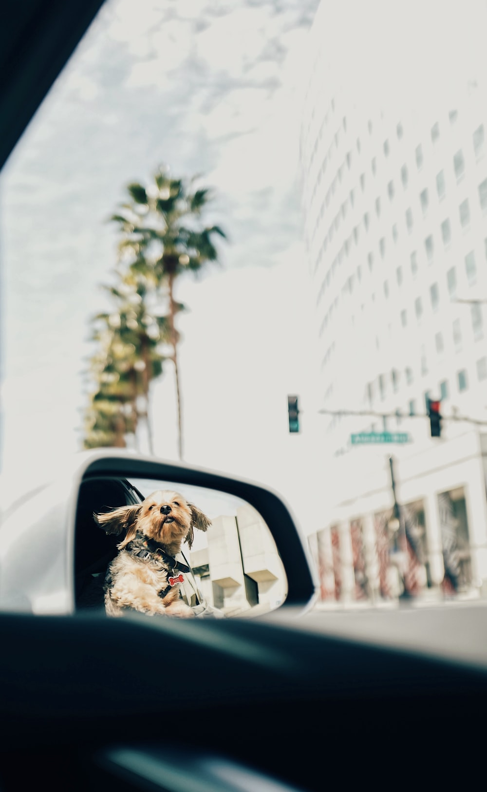 view of dog through vehicle side mirror