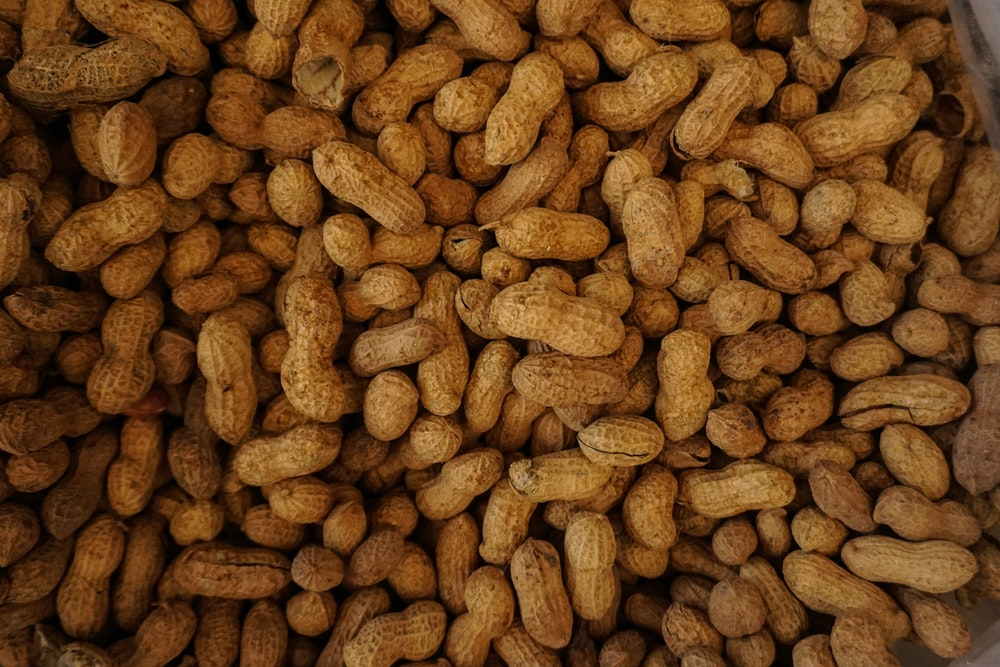 photography of brown nuts