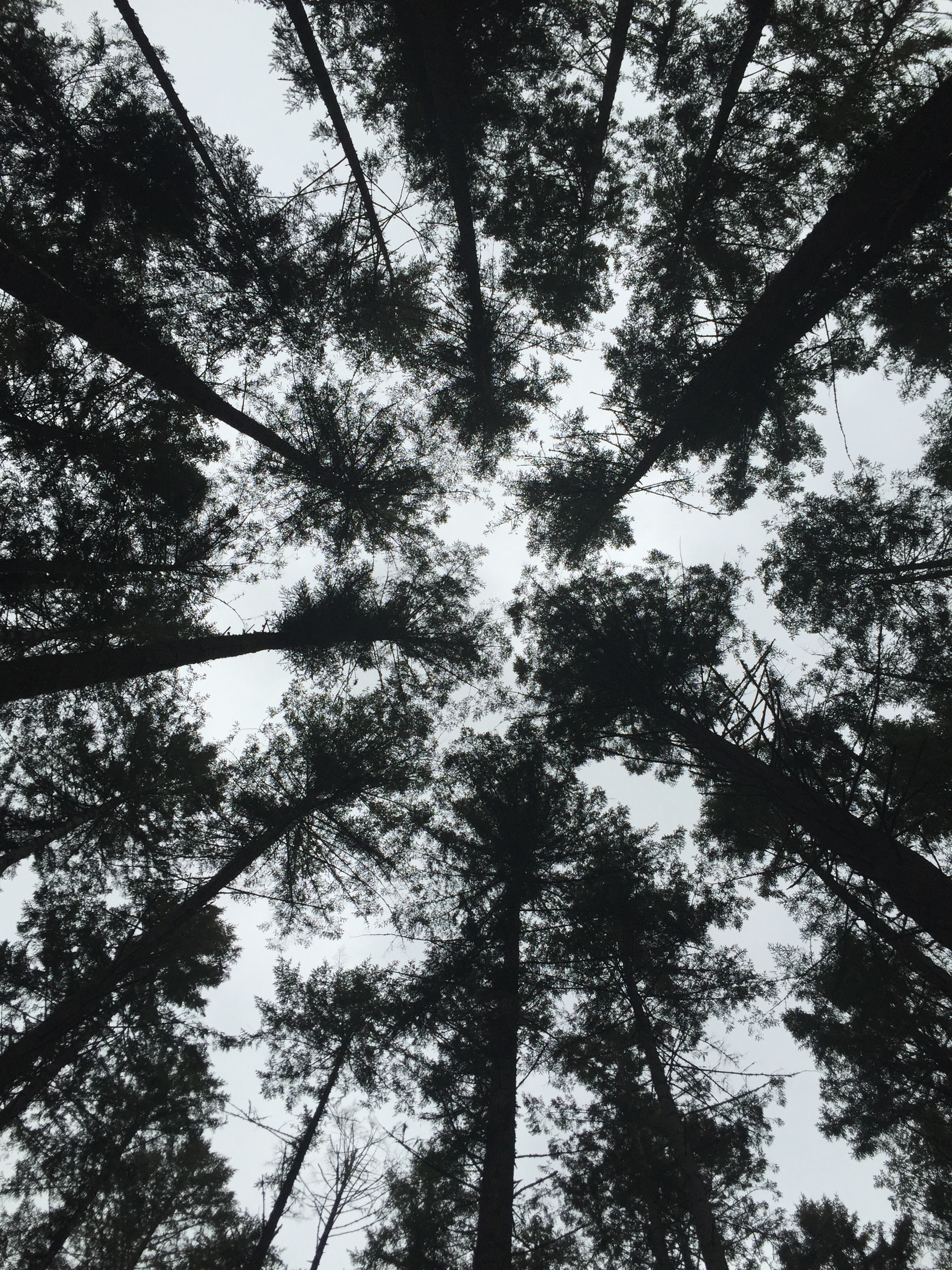 low-angle photography of silhouette of trees under gray sky at daytime