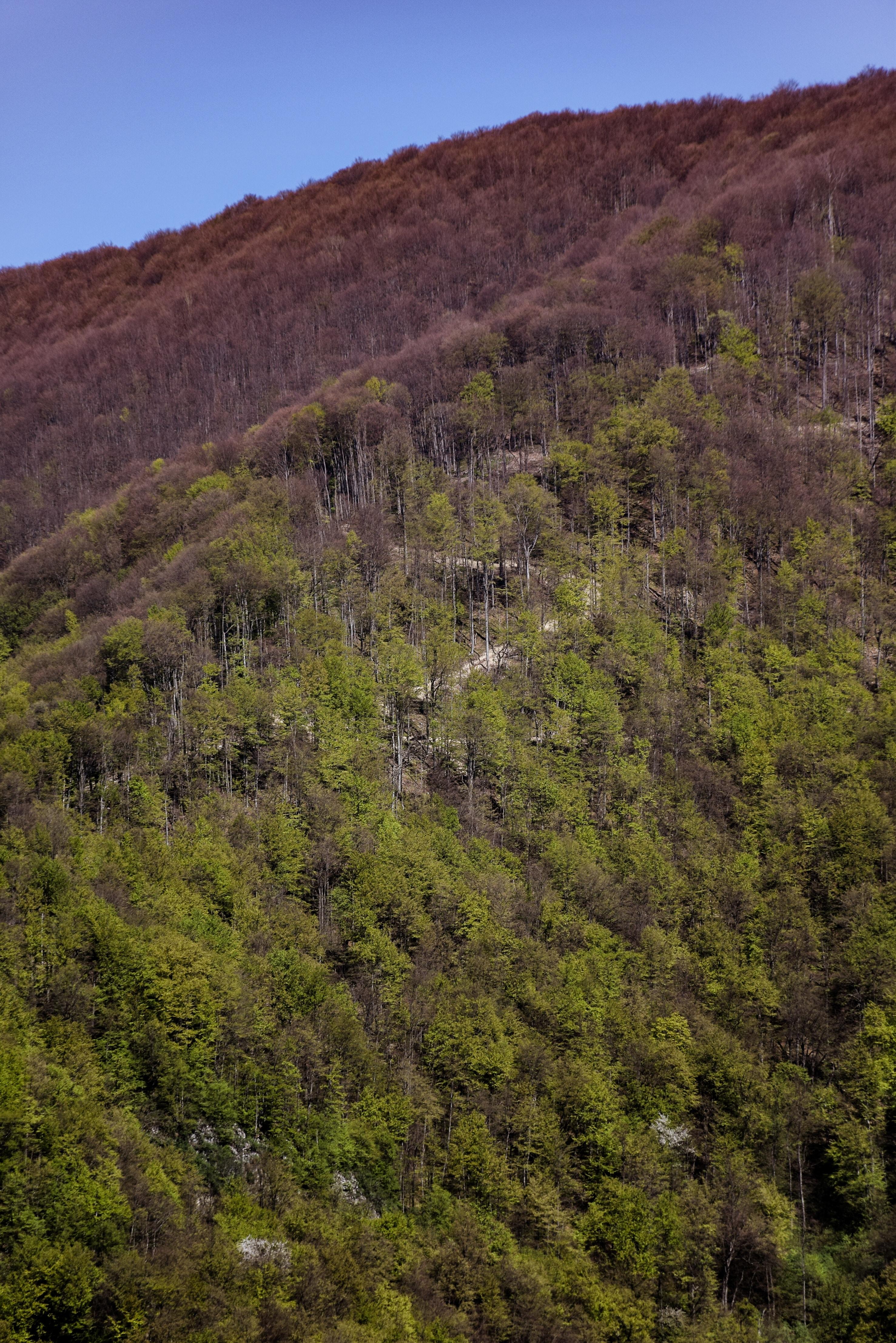 green trees near brown trees