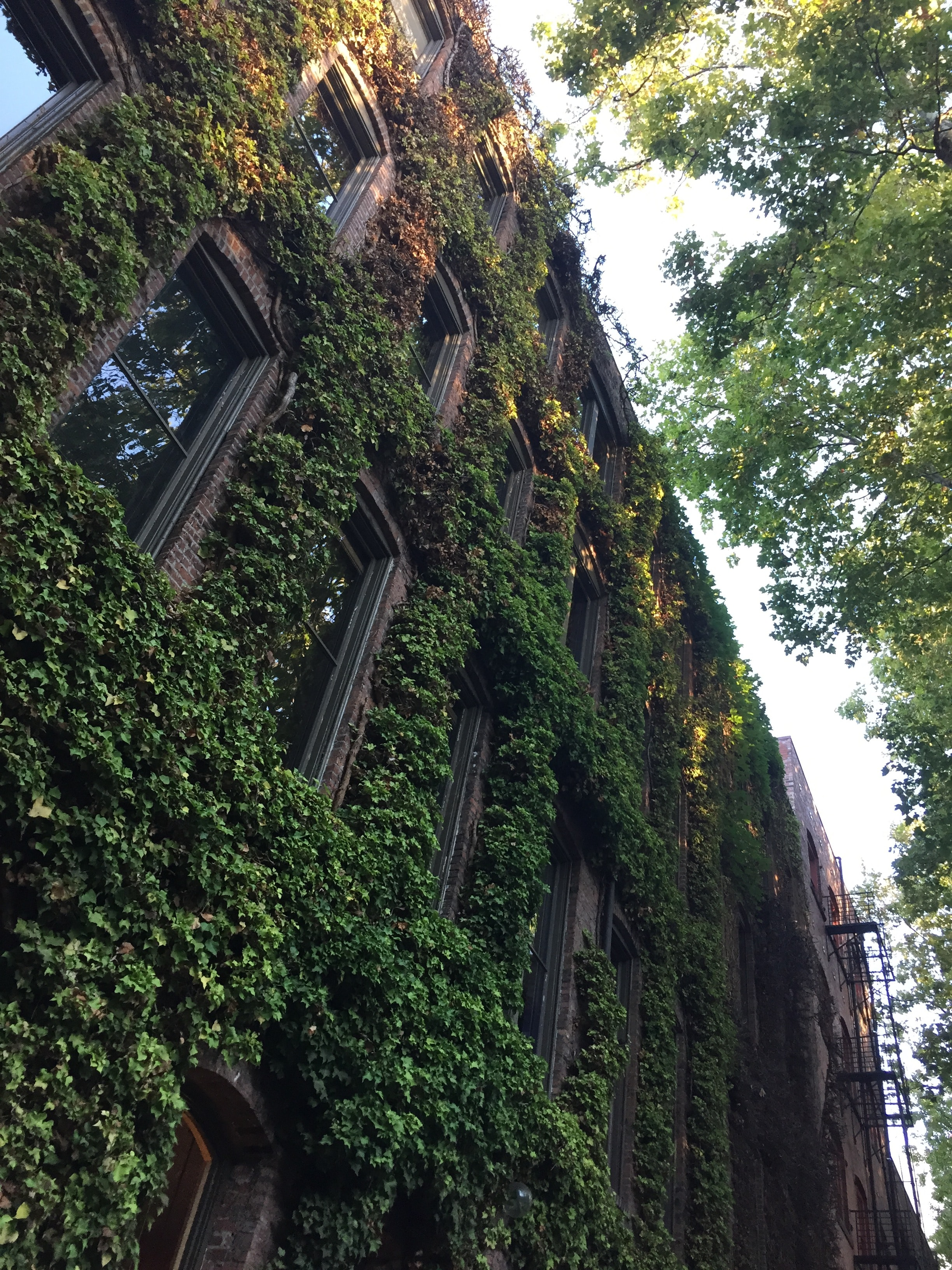 vines on brown brick building