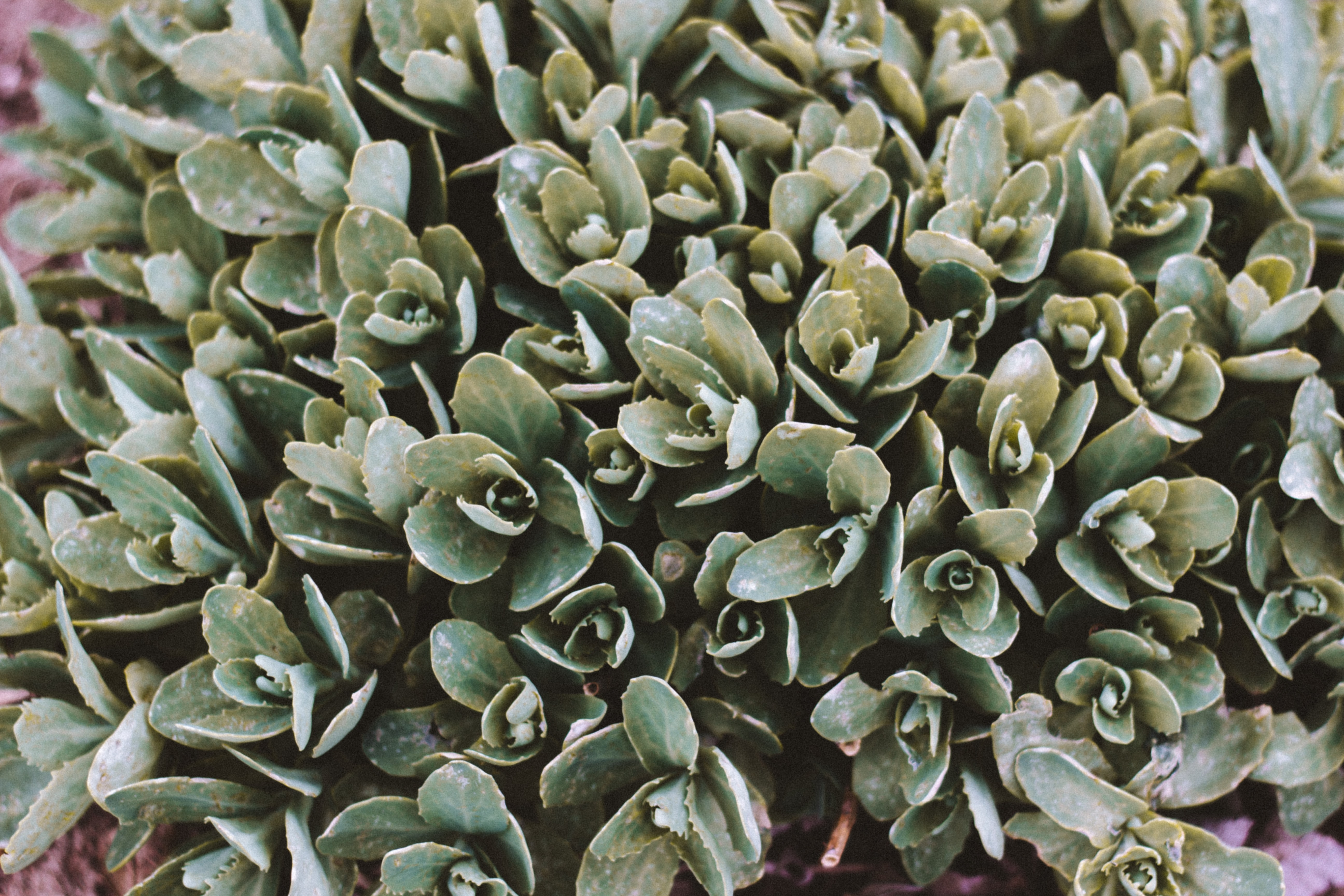 green leafed plant close up photo