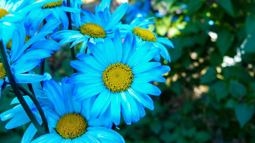 blue petal flower arrangement