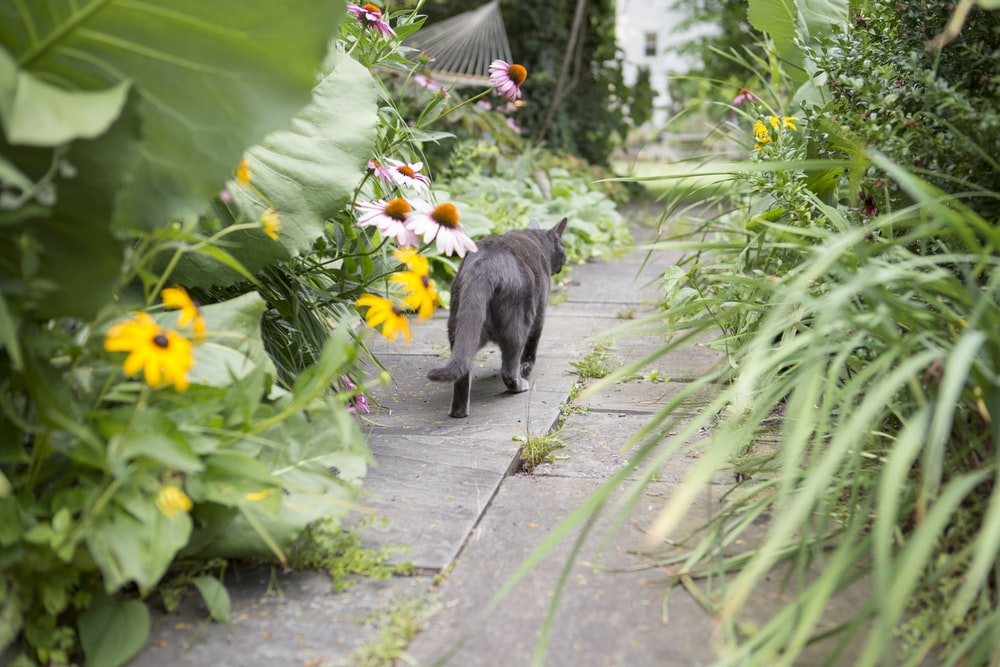 black cat walking between plants