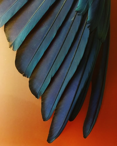 photography of blue and teal feathers