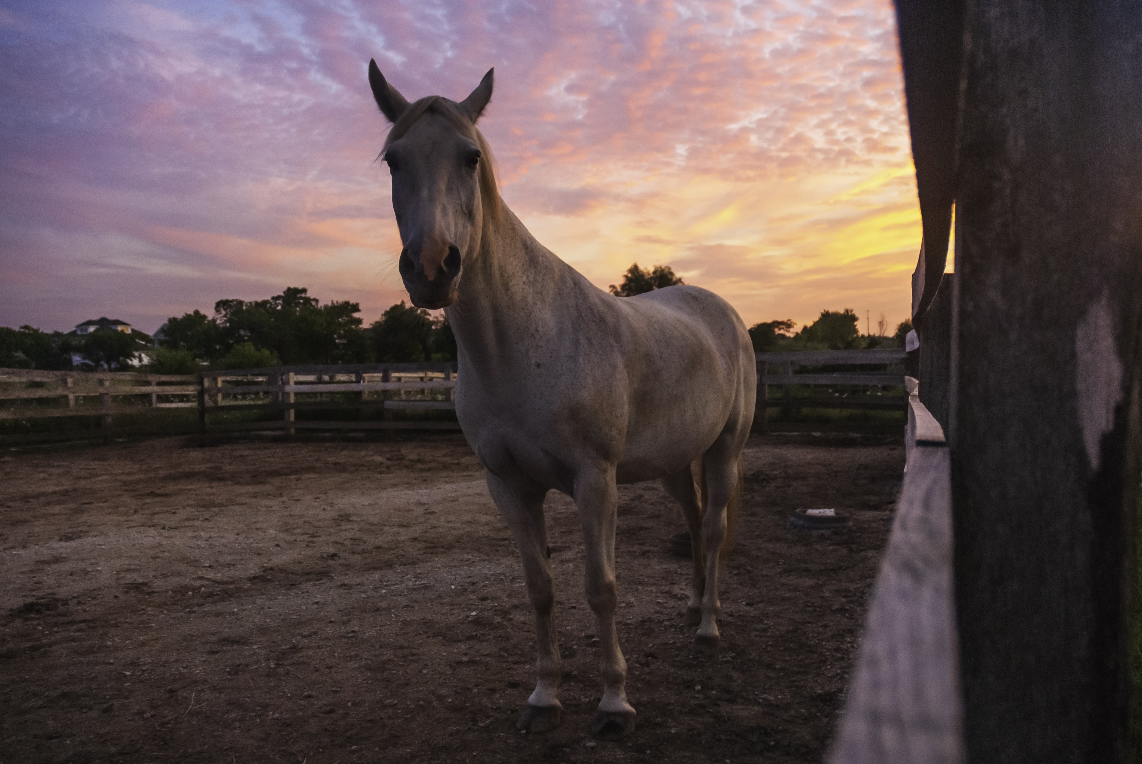 beige horse on ranch