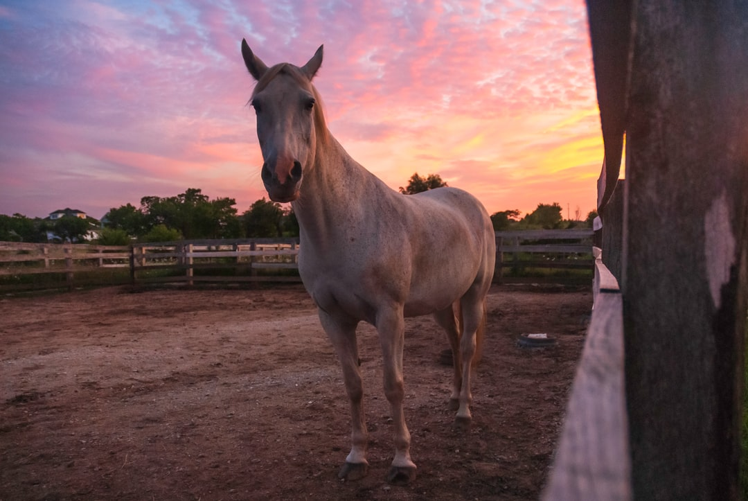 Periwinkle Horse