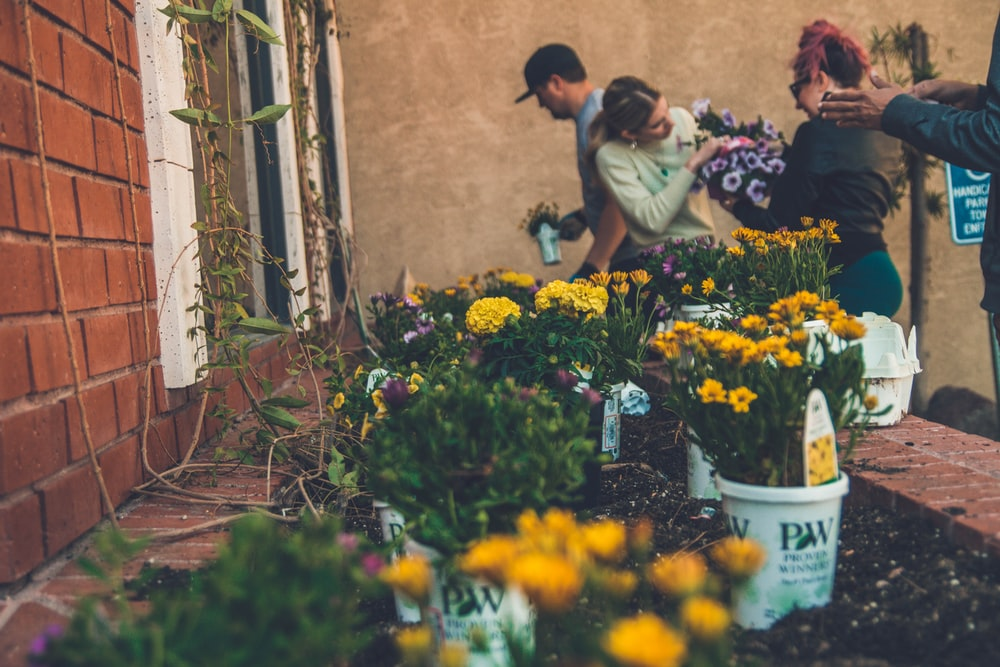 shallow focus photography of yellow flowers near people