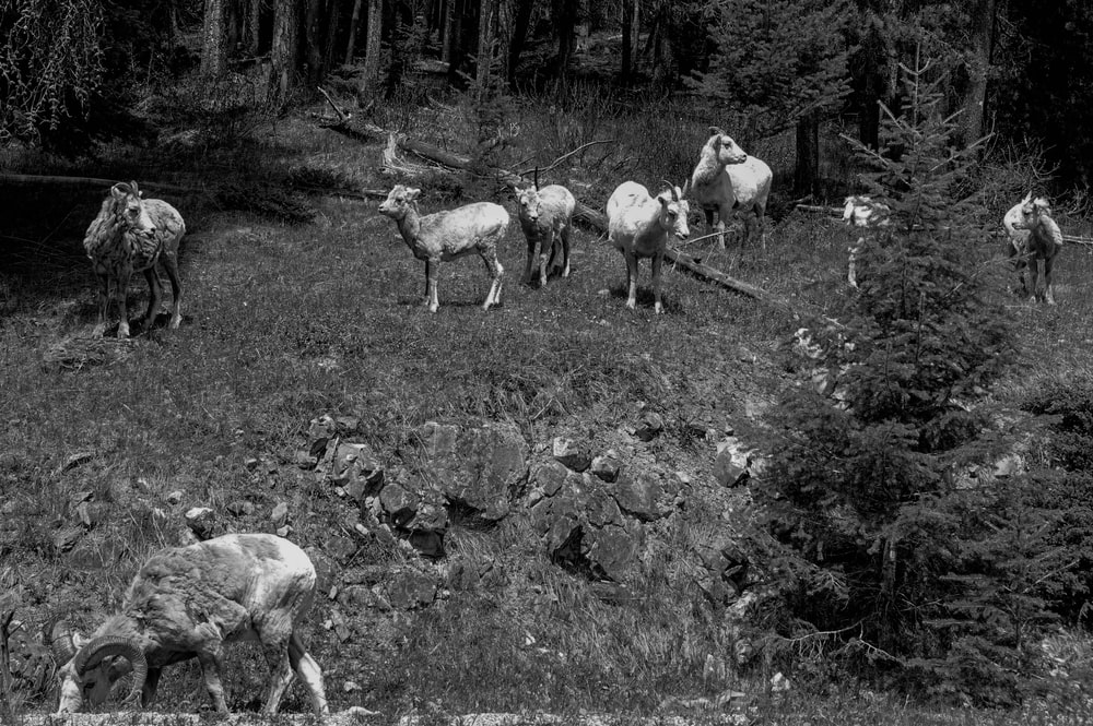 grayscale photography of animal surrounded by trees