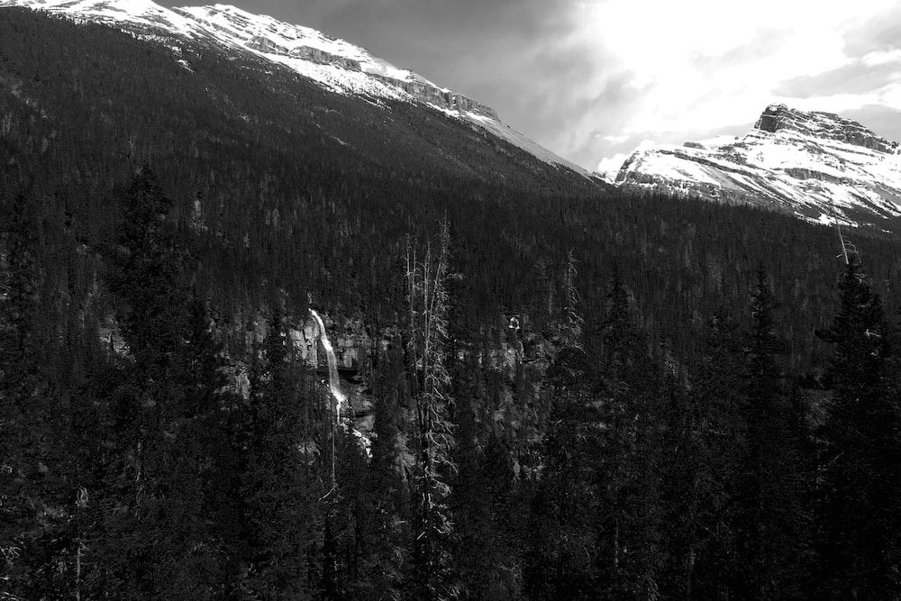 trees and mountain during snow season
