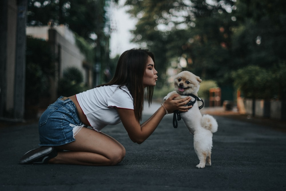 woman petting Pomeranian dog