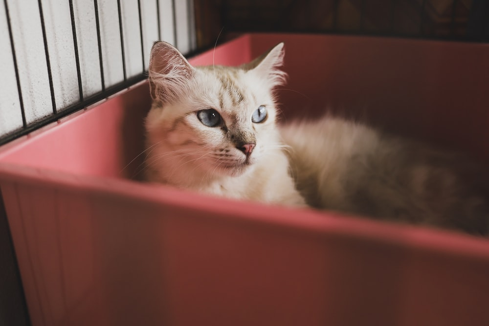 gray cat in red crate
