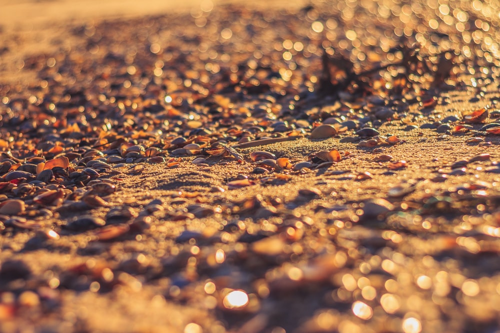 sand during sunset