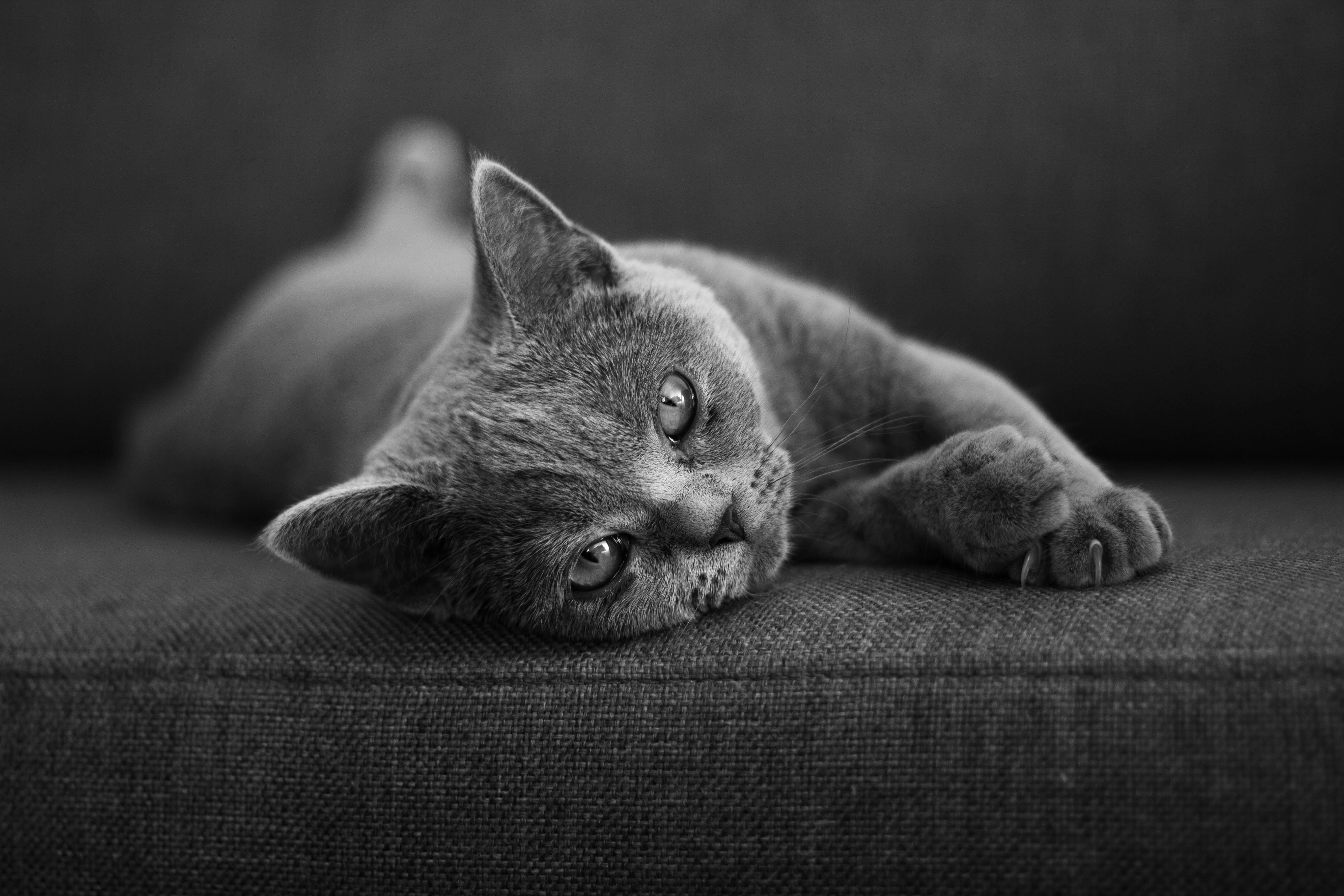 cat lying on cushion