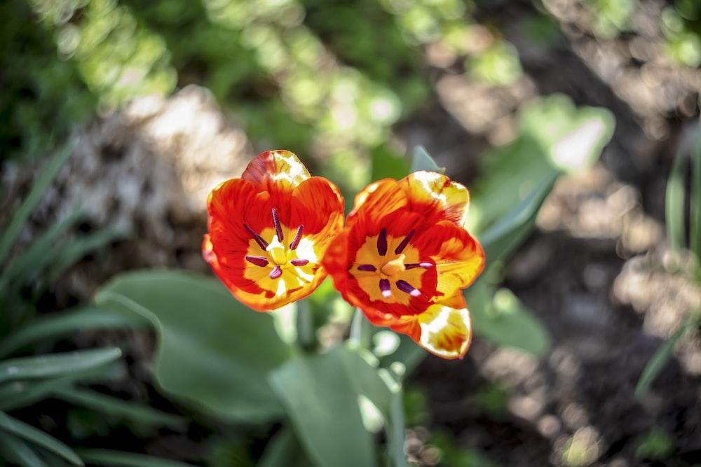 orange flower blooming during daytime