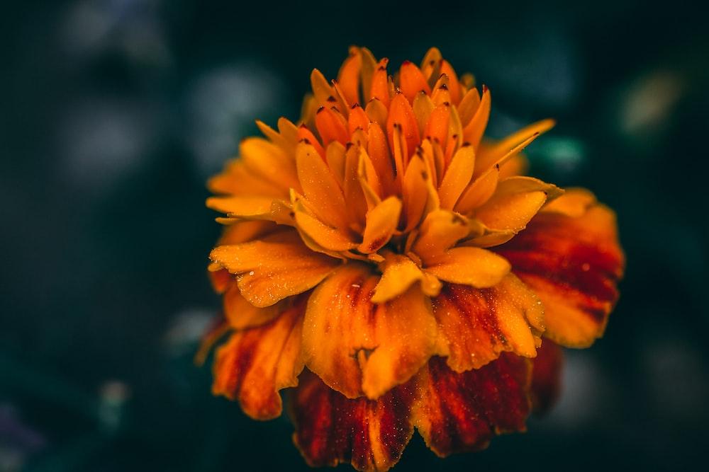 shallow focus lens photo of flower