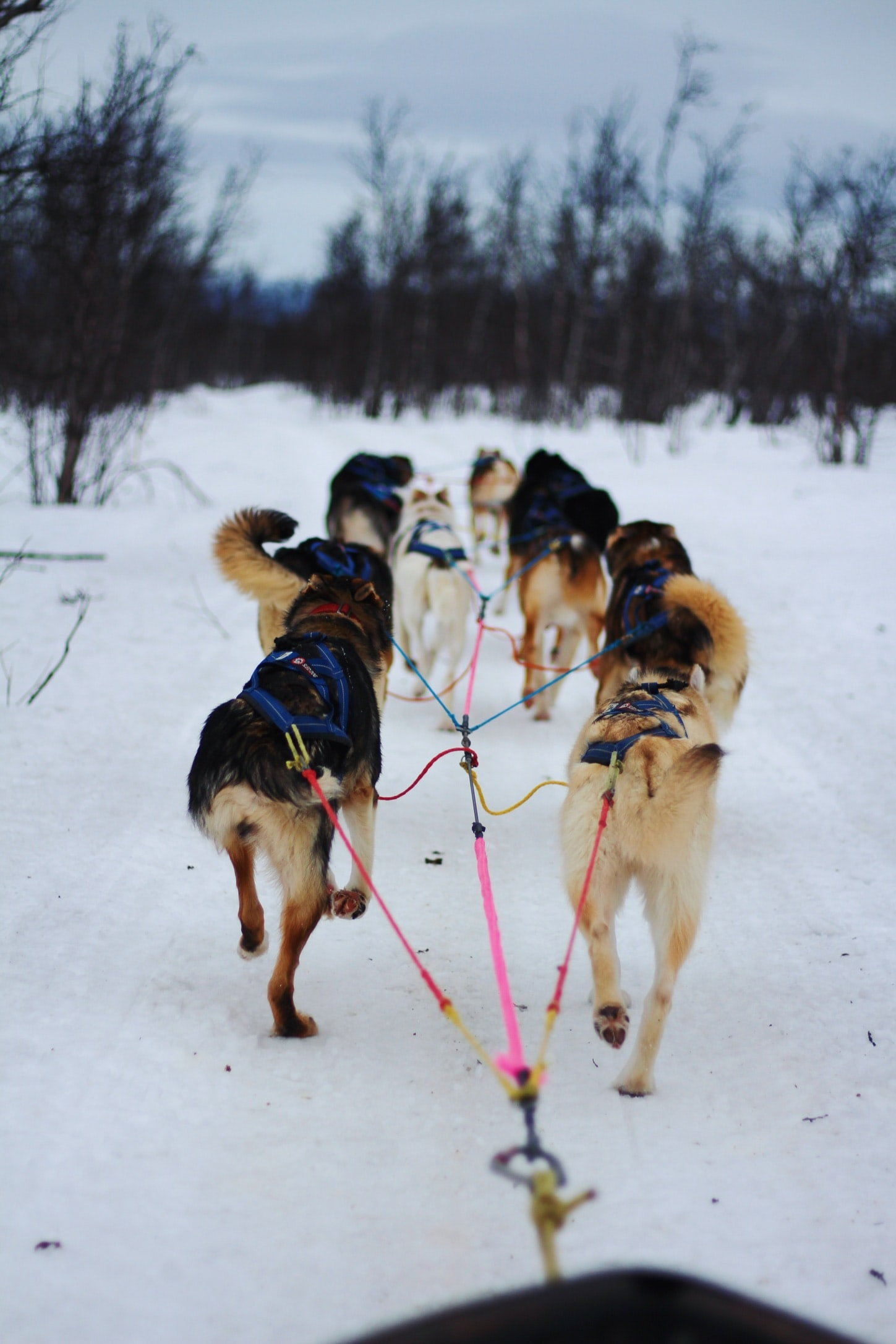 photo of dogs with leash