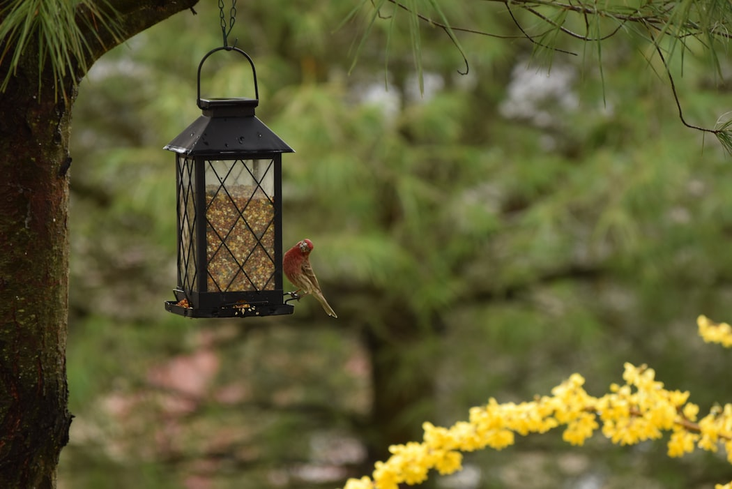 Quick And Easy, Eco-Friendly DIY Bird Feeder You Can Do On A Budget