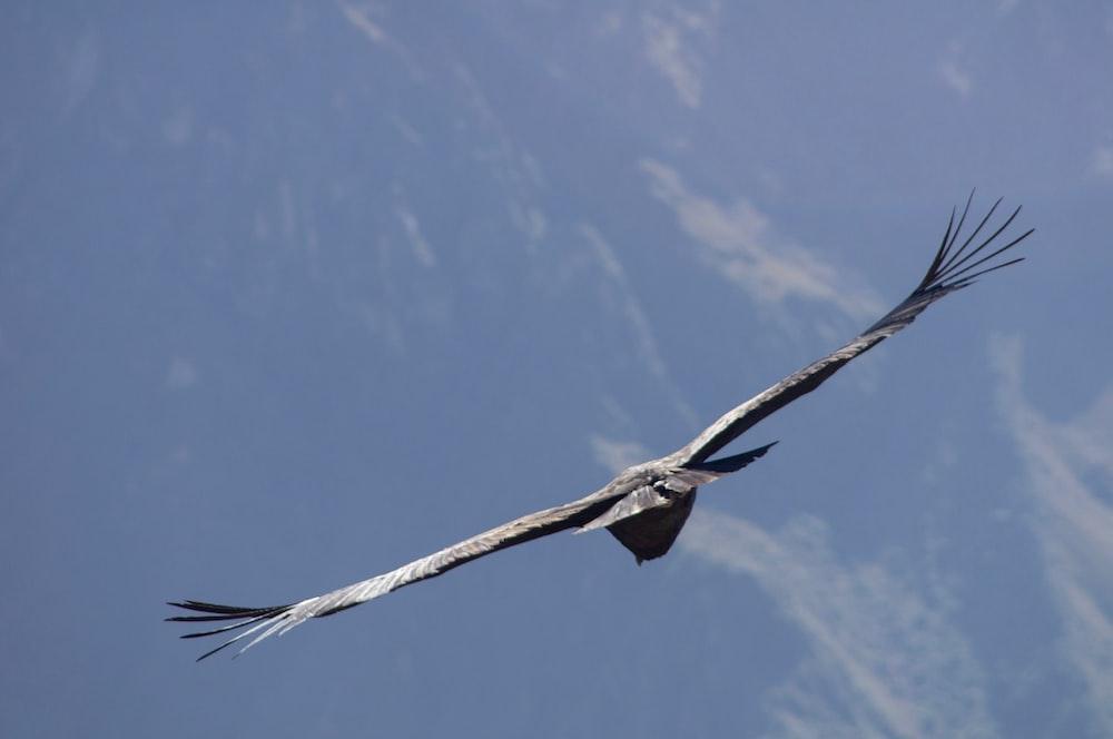 bird on flight under blue sky