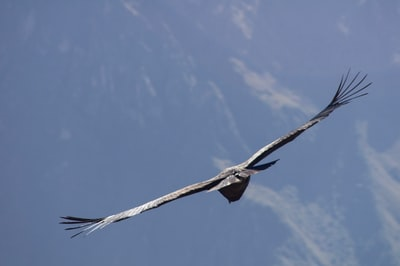 bird on flight under blue sky wing teams background