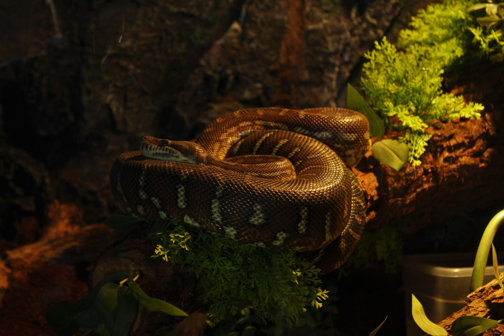 black and gray snake