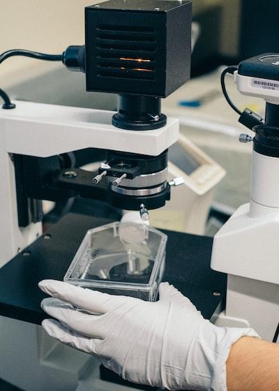 bakterie-pod-mikroskopem