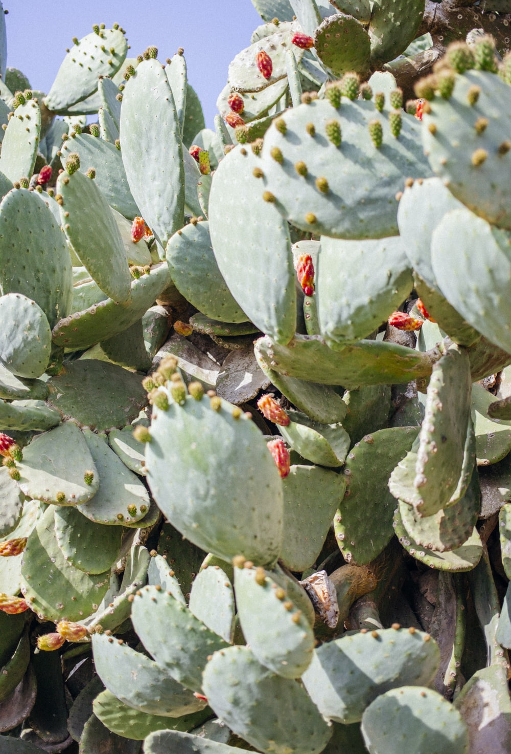closeup photography of green cactus plant