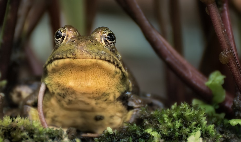 brown and green frog on grass