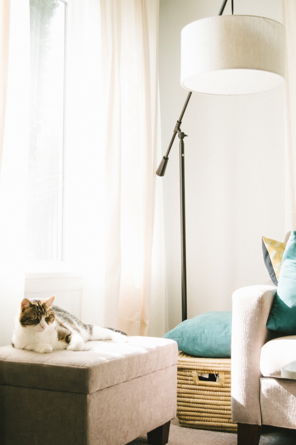 gray and white cat lying on brown ottoman near sofa, clothes hamper and floor lamp inside well-lighted room