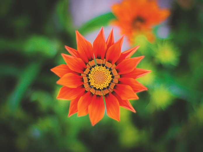 shallow focus photo of orange flower