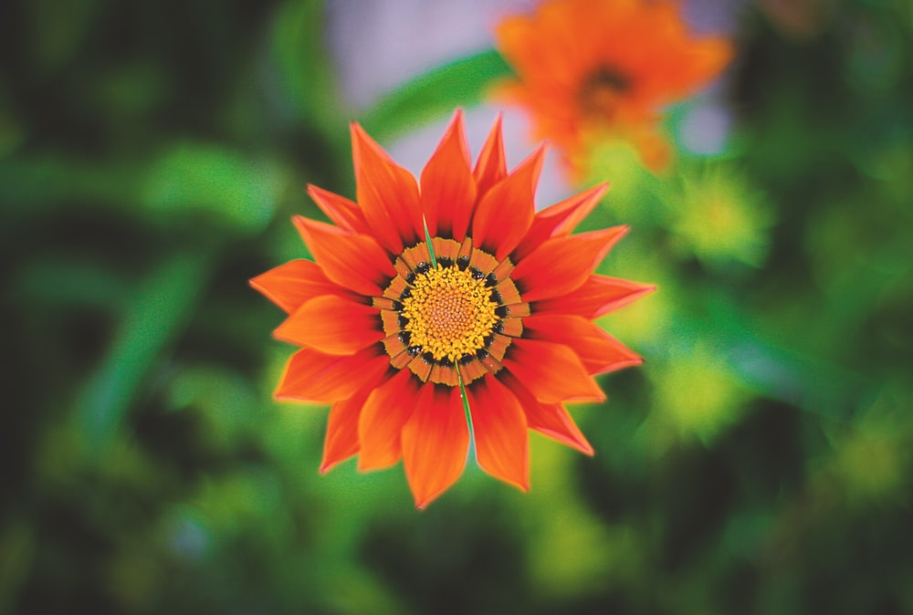 shallow focus photo of orange flower