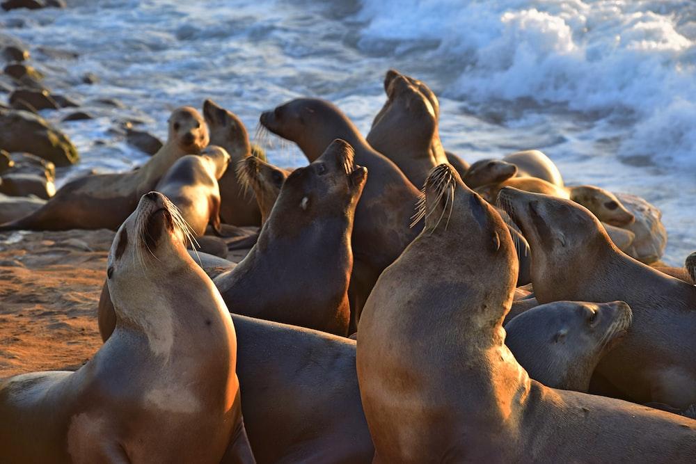 seal on the sea shore