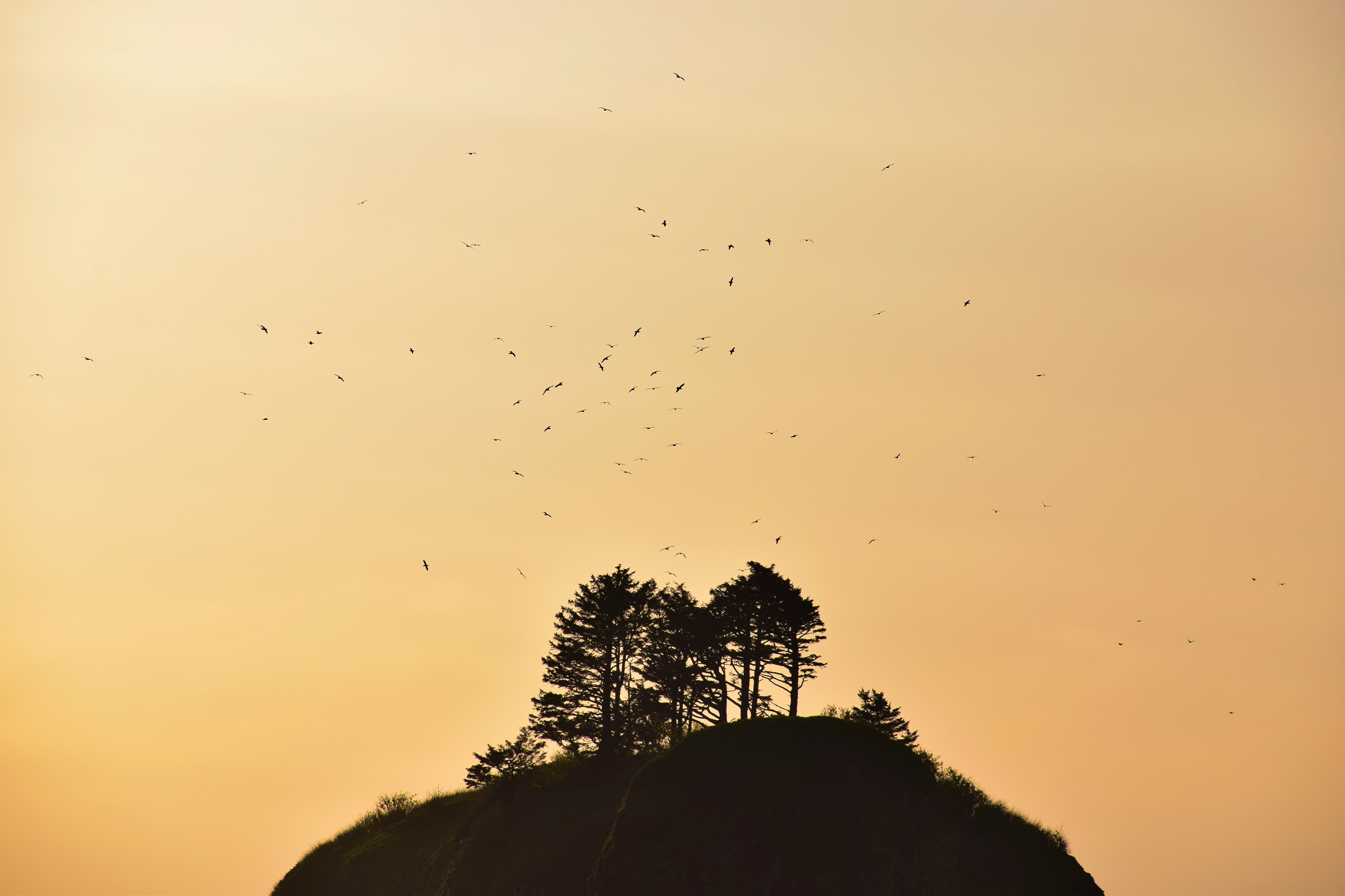 silhouette of trees on hill