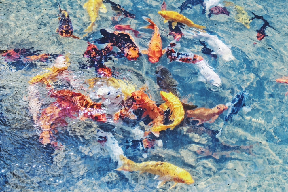 assorted school of fish on body of water