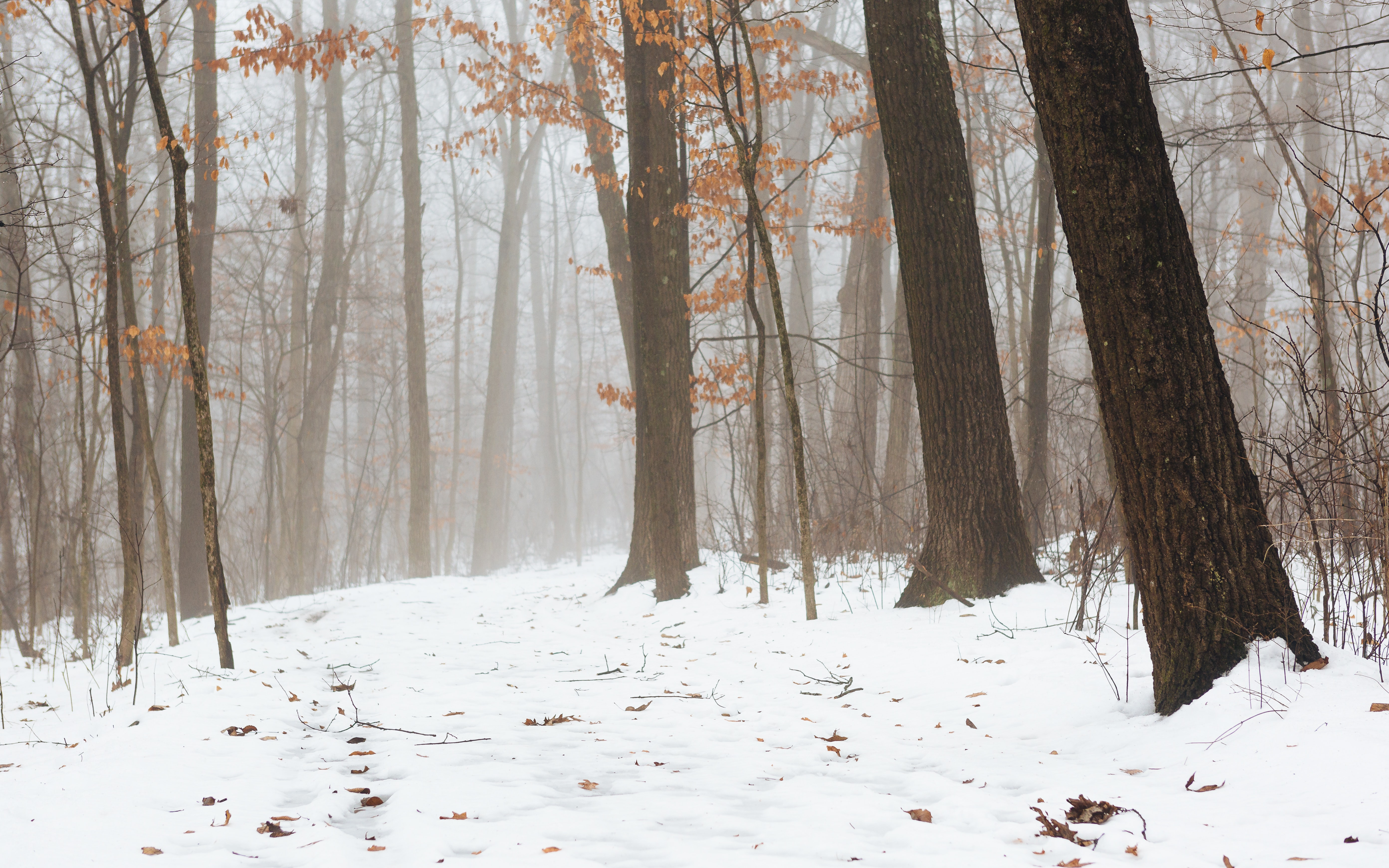 photography of forest trees