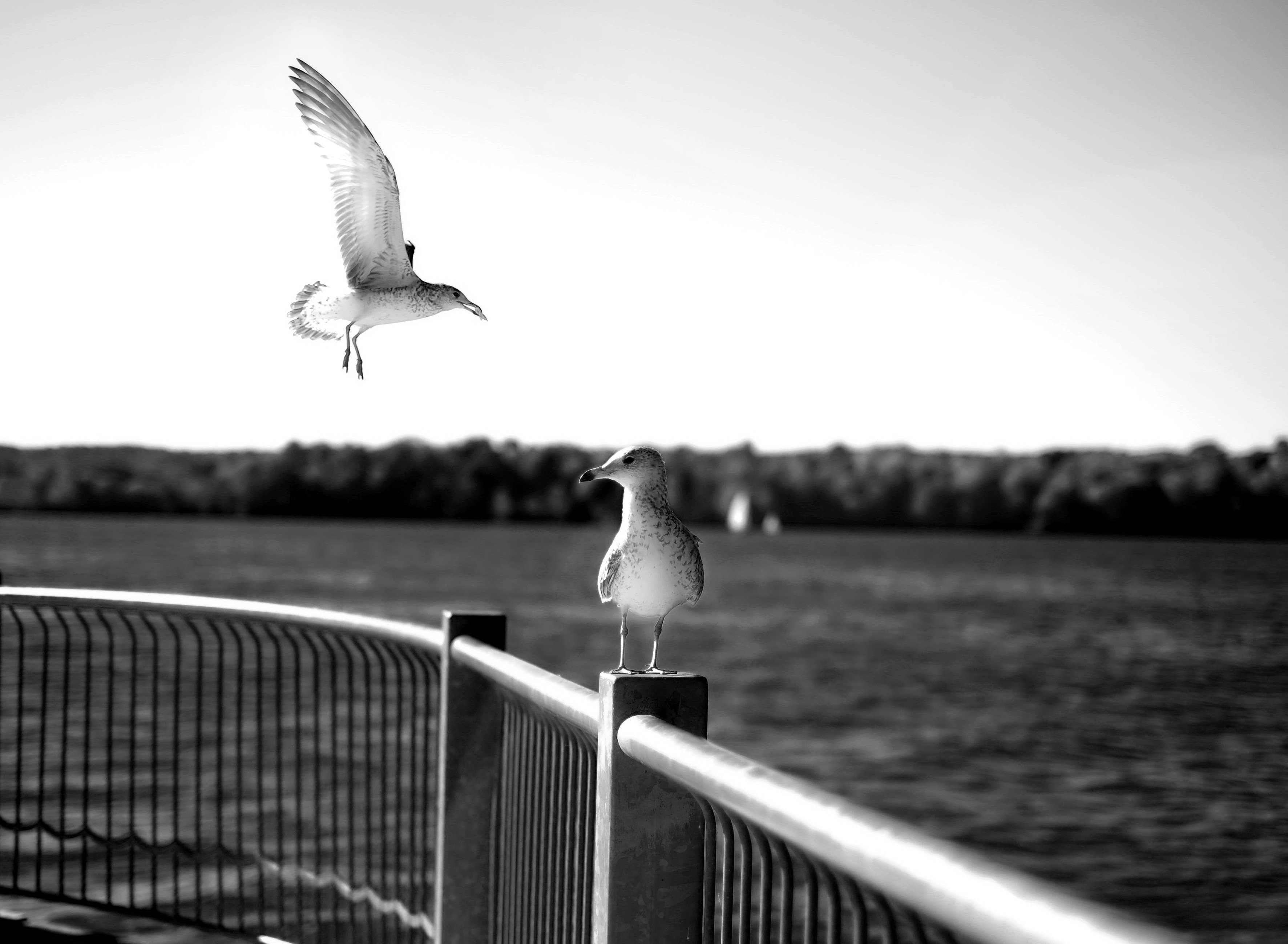 grayscale photo of two birds