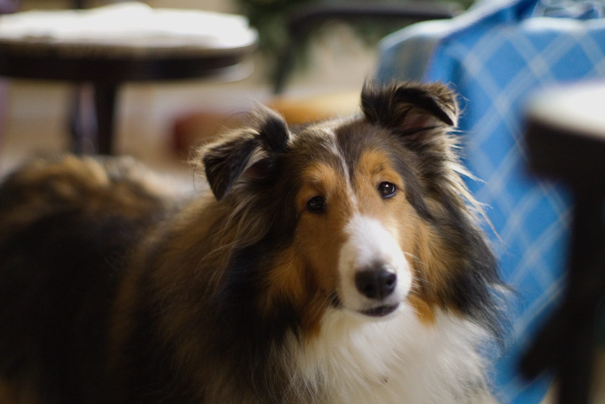 Why We Wish Every Lawyer is Like Lassie
