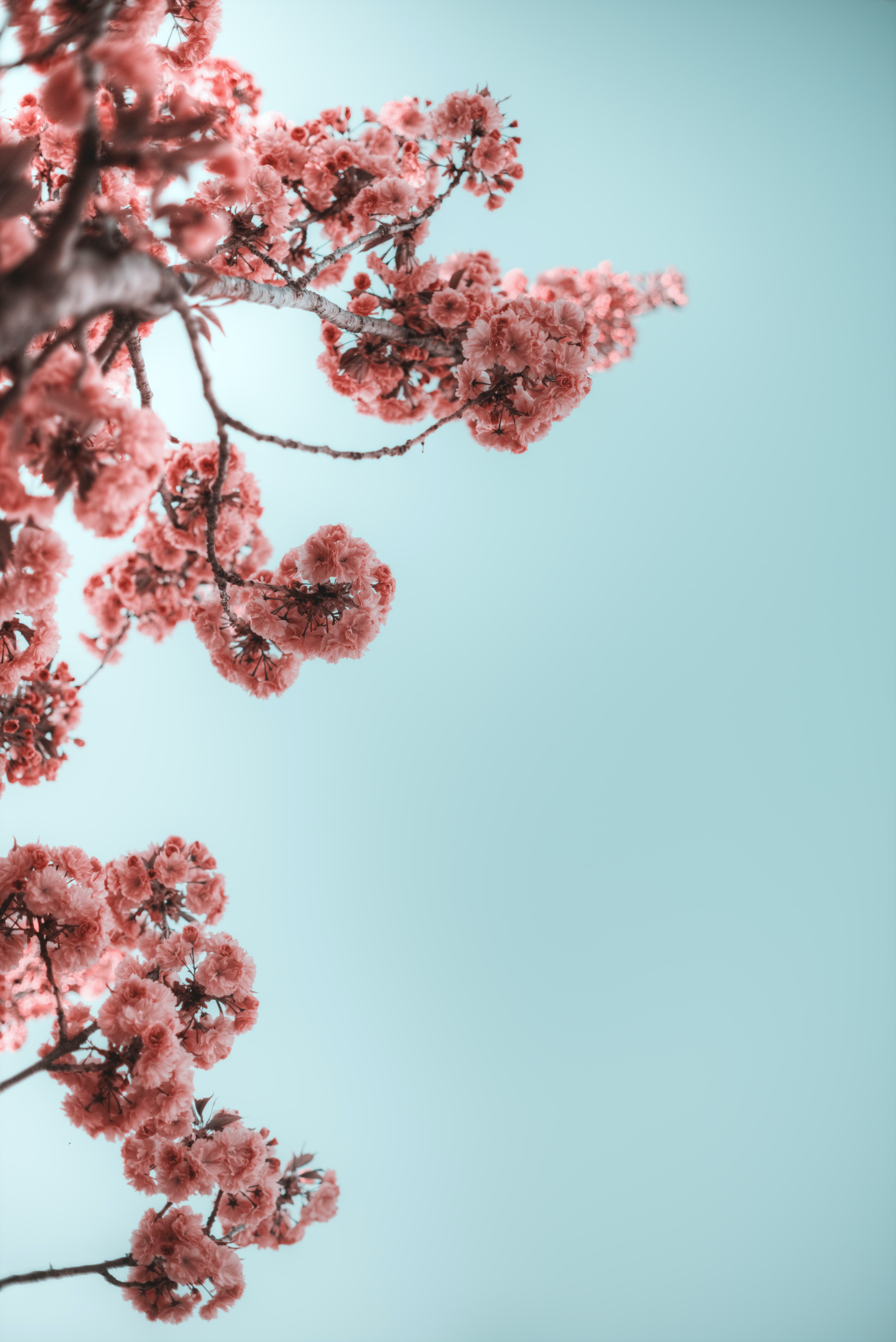 selective photograph of branches with flower