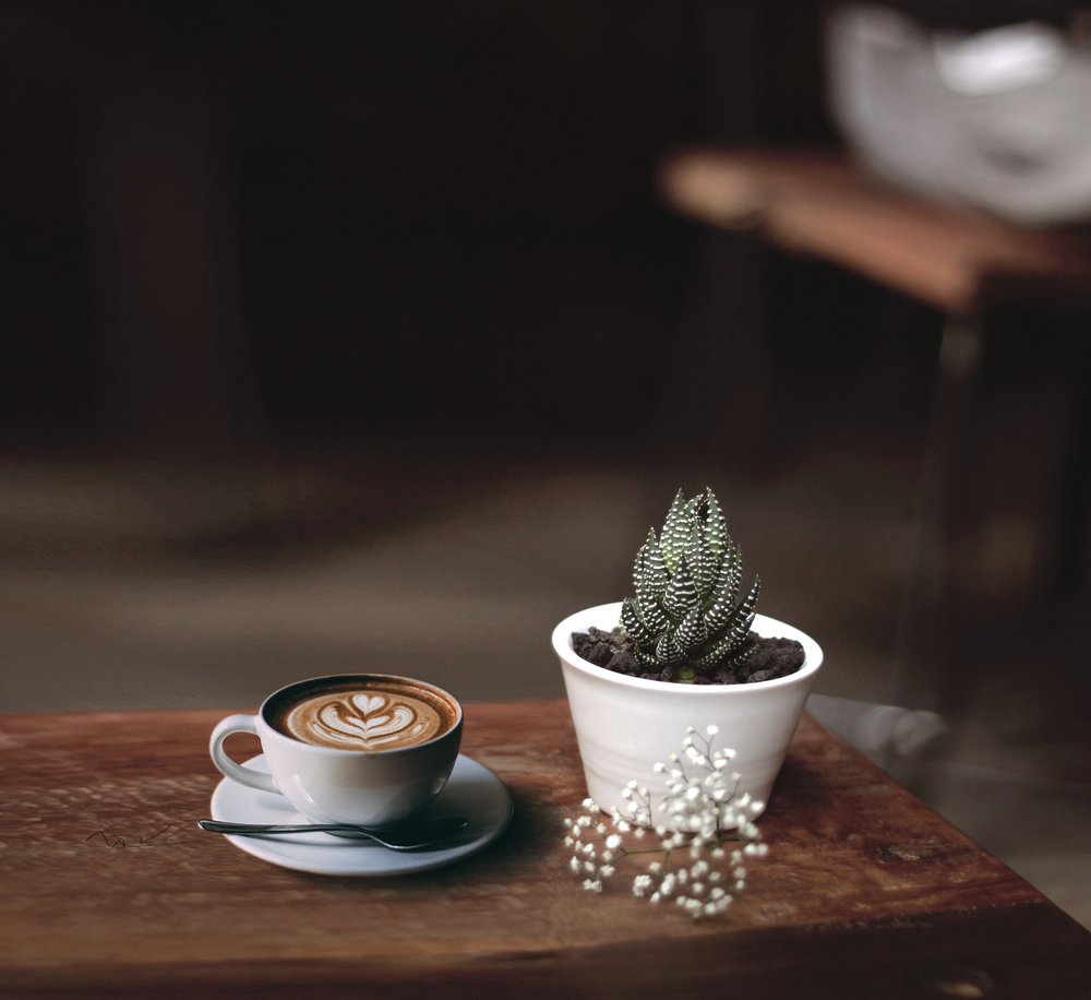 coffee in saucer beside plant on table