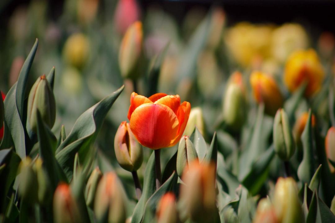 3927. Virágok