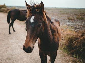 Markets for Conservation: Reining in the Wild Horse Crisis