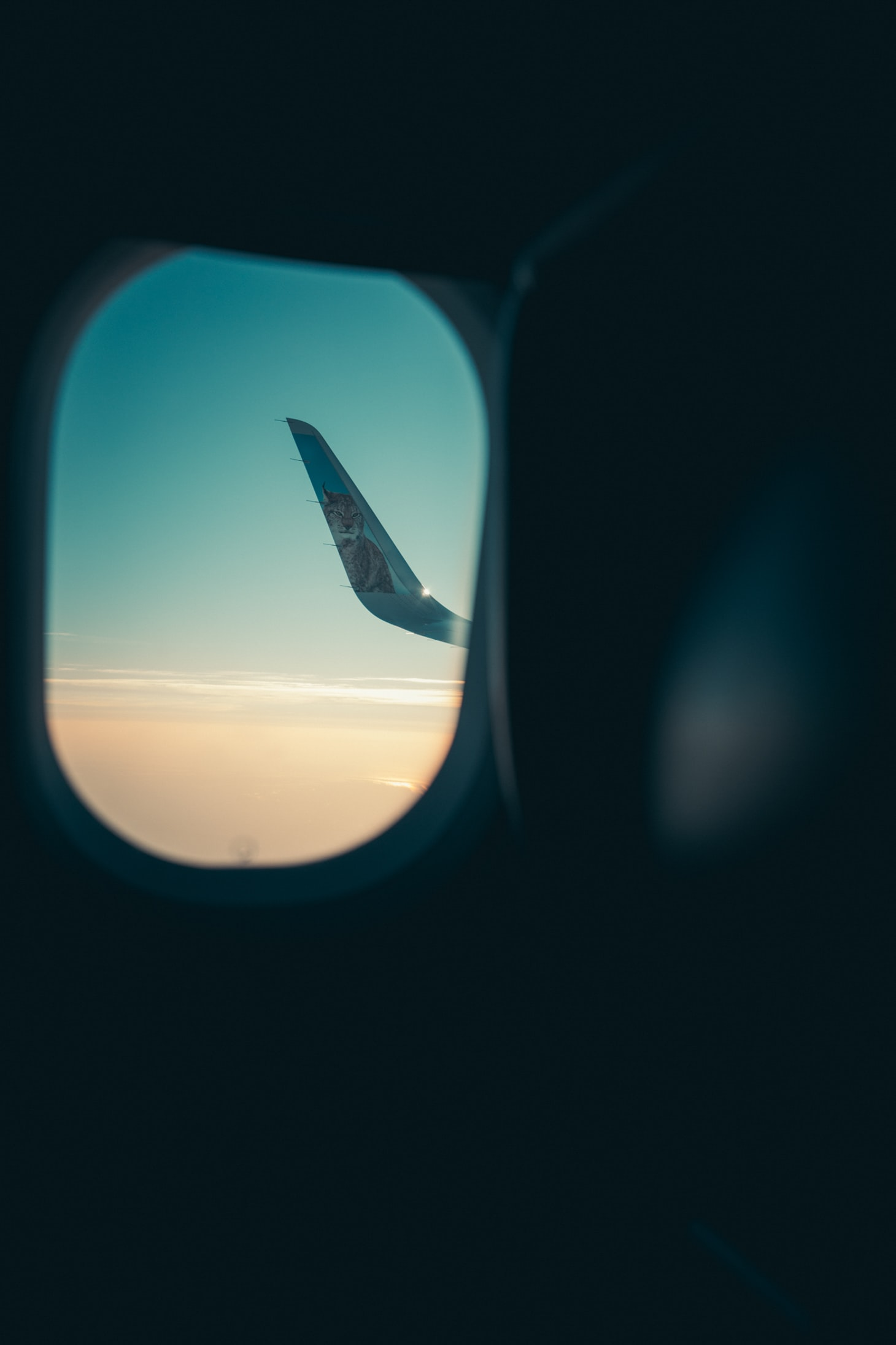photography of airplane