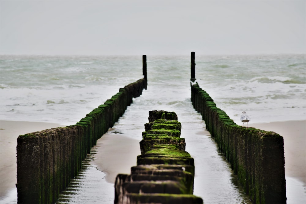 brown wooden fence on seashore