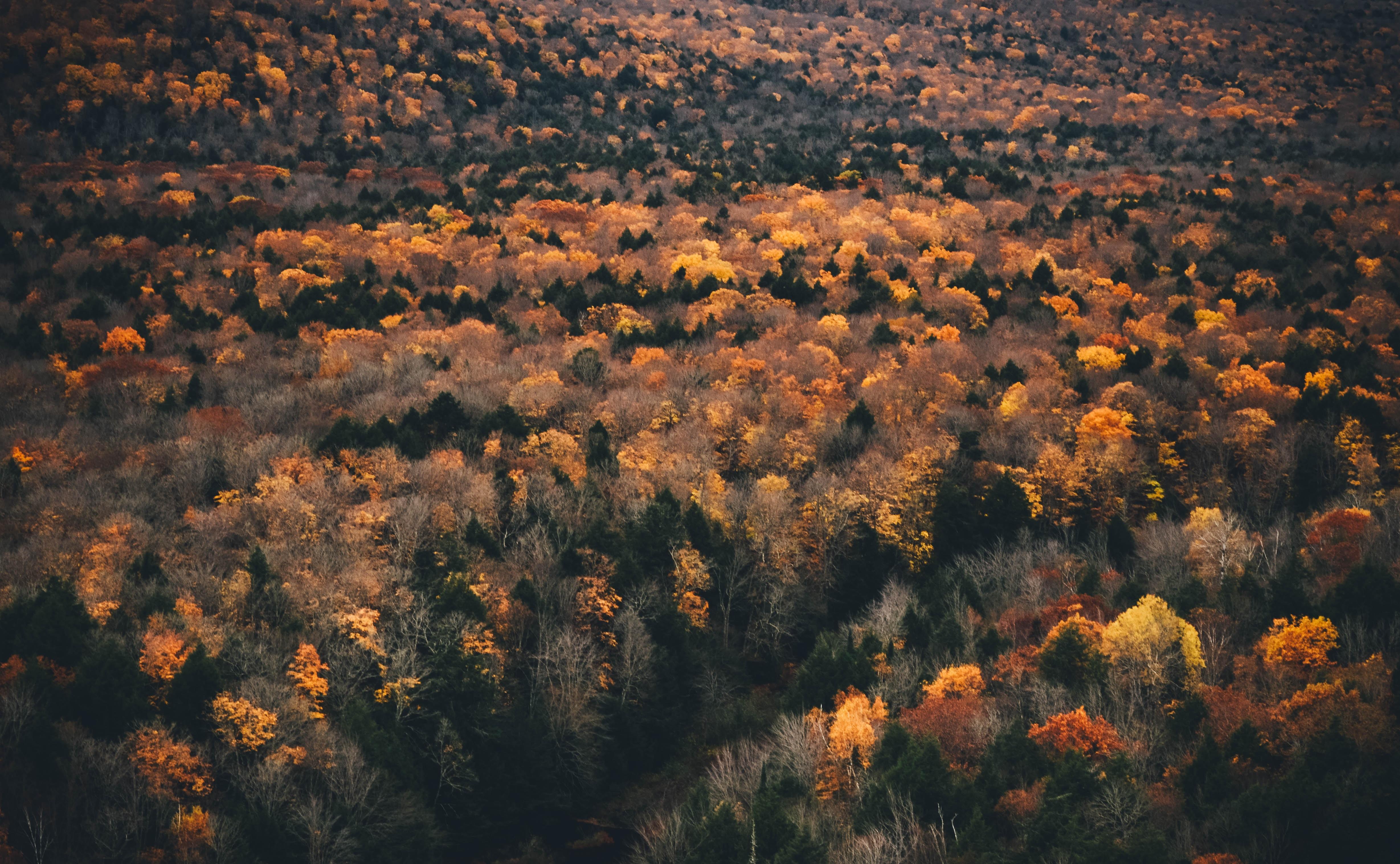 orange petaled flower field photo