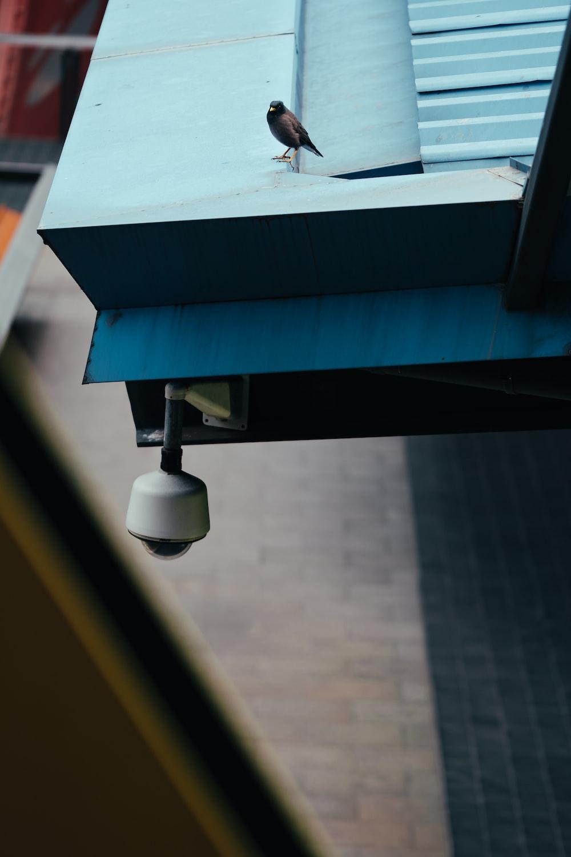 brown bird on blue galvanized iron sheet