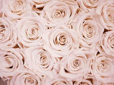 white flower lot roses teams background