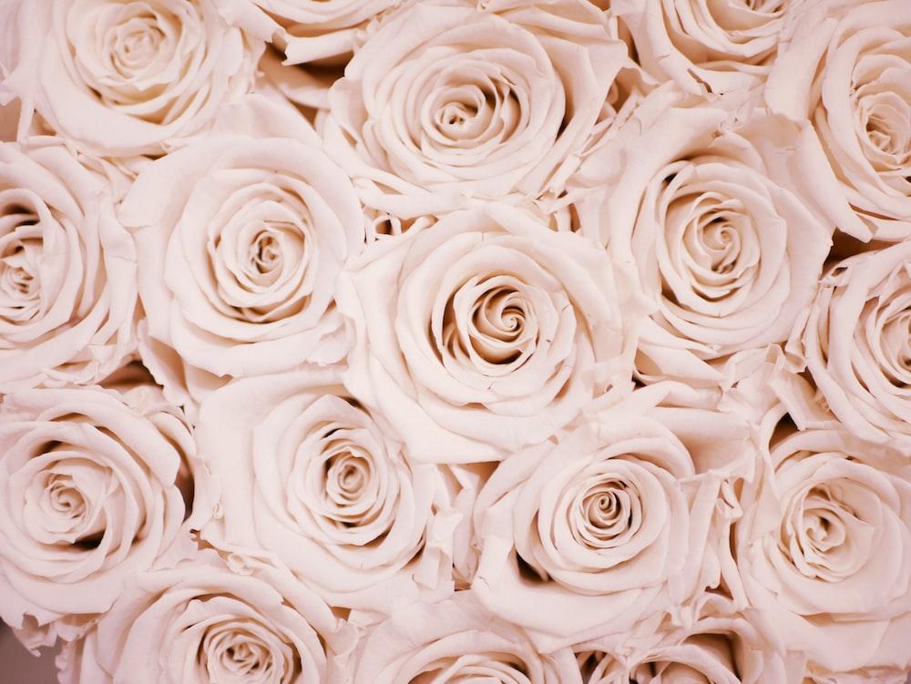 white flower lot