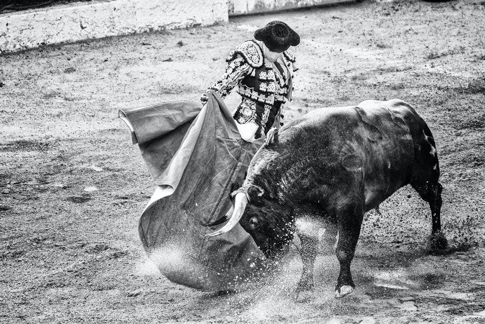 grayscale photo of matador and bull