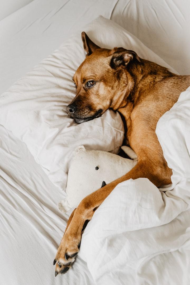 Wake up a Dog